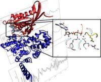 Flinke Enzyme mit zwei Fingern – Schalterprotein strukturell und dynamisch aufgeklärt