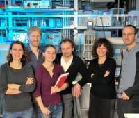 Achillesferse pathogener Bakterien entdeckt