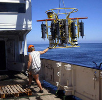 Was reguliert den Stickstoffgehalt im Ozean?
