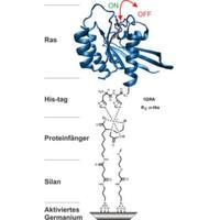 Interaktionen von Membranproteinen mit Infrarotspektroskopie verfolgen