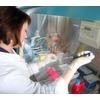 Vielversprechende Stammzelltherapie bei Leukämie