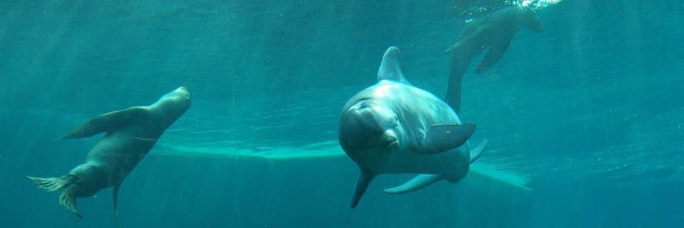 Delfinlagune im Nürnberger Zoo: Moderne Filteranlagen mit Automatisierungstechnik sorgen für hohe Wasserqualität und damit auch für glückliche Delfine und Seelöwen.