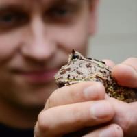Das Geheimnis der Haftmechanismen von Amphibienzungen