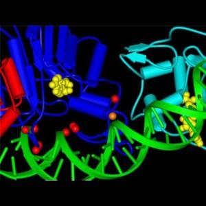 Ausschnitt aus der Struktur der Dnmt3a DNA Methylt-ransferase (rot, blau und cyan) mit DNA (grüne). Die Positionen von Mutationen in Tumoren sind durch rote und orange Kugeln dargestellt.