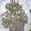HP akquiriert Eucalyptus