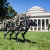 Roboter-Gepard springt über den Rasen des MIT