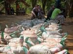 Njungala, nördliche Kivu-Provinz: Das abgebaute Zinnerz wird in Säcken abgepackt und wartet auf den Versand.