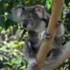 OpenStack als Glücksbringer mit süßem Eukalyptus-Bonbon für den Geschmack