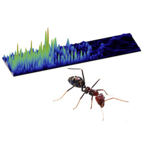Ameisen und Wellen - gibt es hier Gemeinsamkeiten?