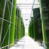 Pöyry plant Produktionsanlage mit 200 Tonnen Algenbiomasse für Ecoduna