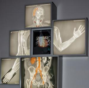 Unterschiedliche Einblicke in das Innere unseres Körpers