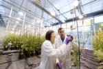 Insgesamt will Bayer im Crop-Science-Geschäft stärker wachsen als der Markt und den Umsatz auf über 11 Milliarden Euro im Jahr 2017 (2014: 9,5 Milliarden Euro) steigern. Das entspricht einem durchschnittlichen jährlichen Wachstum von ca. 5 %. Die bereinigte Ebitda-Marge soll mit 23 bis 25 % (2014: 24,9 %) auf einem führenden Niveau gehalten werden.
