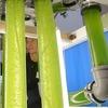 Der Weg zu einer biobasierten Wirtschaft