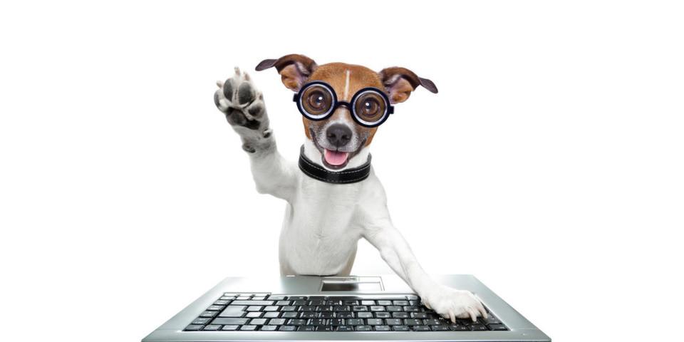 Selbst für Haustiere hält der Gadgets-Markt etwas bereit.