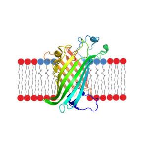 Empfindliche Membranproteine sicher in Lösung halten