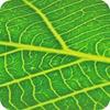 Nachhaltigkeit ist die treibende Kraft der biobasierten Wirtschaft
