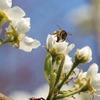 Simatic sorgt für Honigschlecken