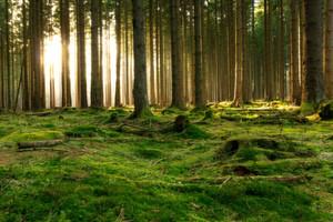 Umweltgifte lassen sich noch lange im Waldboden nachweisen