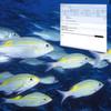 Rechtliche Bedenken bei Phishing-Schutz