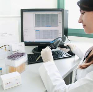 NMR-Methode ermöglicht Nieren-Diagnostik ohne Biopsie