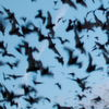 Akustisches Fledermaus-Monitoringsystem für Windkraftanlagen ausgezeichnet