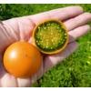 Messungen des Redoxpotenzials an der exotischen Lulo-Frucht