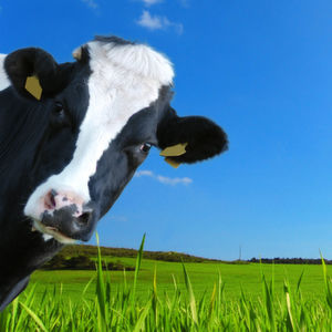 Was die Digitalisierung für den Agrarsektor bedeutet