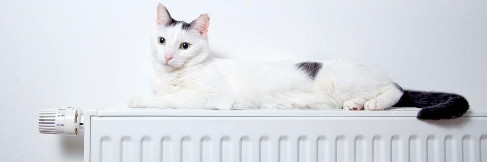 Die Wolke nutzen und gleichzeitig wohlige Wärme genießen. Mit Cloud & Heat verpufft die Abwärme großer Serveranlagen nicht.