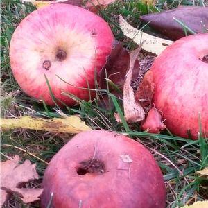Das neue kohlenstoffbasierte Material für Natrium-Ionen-Batterien kann aus Äpfeln gewonnen werden.