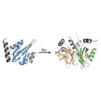Lichtempfindliche Proteine als Vorbild für künstliche Fotorezeptoren