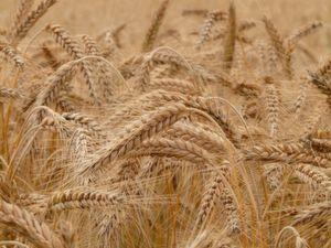 Im nächsten Jahr wird im Marketing nicht nur der Content selbst entscheidend, sondern die erreichten Reichweiten in den sozialen Kanälen wird die Spreu vom Weizen trennen.