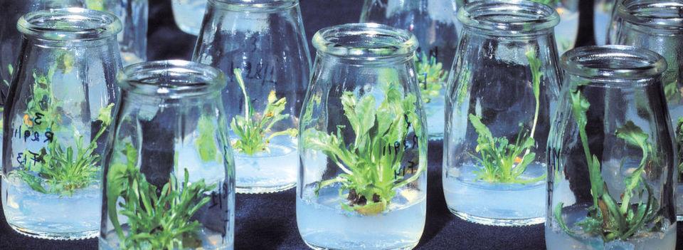 Syngenta ist auf Pflanzenschutz und Agrachemielösungen spezialisiert.