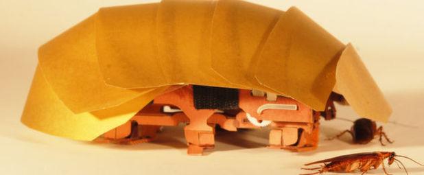 Komprimierbarer Roboter CRAM mit seinem Vorbild, der Kakerlake: Der handtellergroße Roboter hat einen sehr flexiblen Rückenschild und einen Körper, dessen Bestandteile bei Druck von oben zur Seite ausweichen.