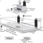 Illustration der Forscher zum Vermessungsaufbau für die Kakerlaken. Die beiden US-Wissenschaftler Kaushik Jayarama und Robert Full von der University of California in Berkeley ließen amerikanische Großschaben (Periplaneta americana) durch genau vermessene Gänge laufen.