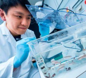 Der Doktorand Chi-Chung Wu forscht zur Herzregeneration bei Zebrafischen.