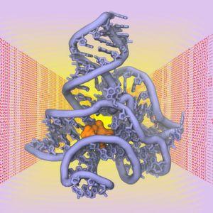 """Die räumliche Struktur von Biomolekülen wie Proteinen, DNS oder RNS ist entscheidend für ihre Funktion als """"molekulare Maschinen"""" in der Zelle."""