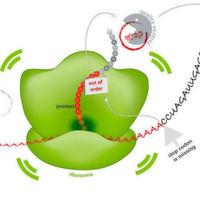 Stoppsignale gegen giftige Proteinaggregate