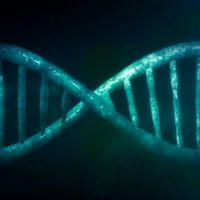 """Fehlgeleitete """"Verkehrspolizisten"""" im Genom blockieren"""