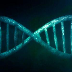 Epigenetik – Kleine biochemische Veränderungen an der DNA, so genannte Histon-Methylgruppen, geben das Start- oder Stoppsignal für die Aktivität einzelner Gene.