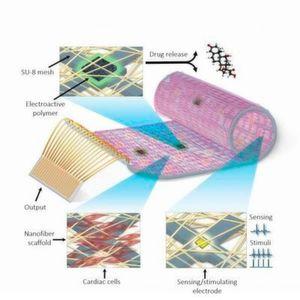 Schnitt durch das organisch-künstliche Herzgewebe: Das Material besteht aus lebenden Herzzellen (unten links), elektroaktiven Polymeren (oben links) sowie Elektroden, die Sensor- beziehungsweise Stimulierungsfunktionen übernehmen können (unten rechts).