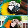 3D-Metalldruck im Dienste der Veterinärmedizin: neuer Schnabel für Papagei