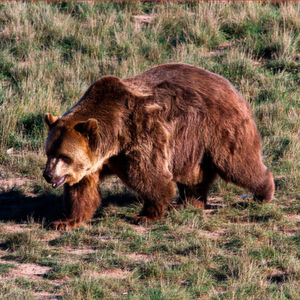 Hackerprogramm Grizzly Steppe erkennen