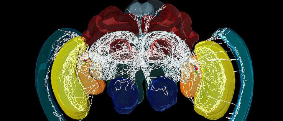 Detaillierter Blick ins Uhrwerk des Gehirns