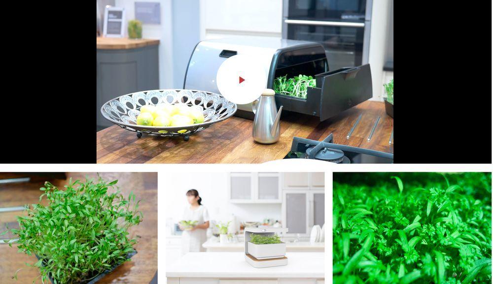 ebv iot hero tip crop oasis pflanzen etwa kr uter lassen sich in der wohnung unter idealen. Black Bedroom Furniture Sets. Home Design Ideas