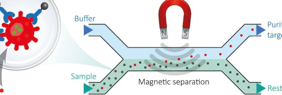Fig. 1: The bacterial target cells are purified and separated from the sample matrix in a microfluidic disposable cartridge by means of a magnetic field (cutout).