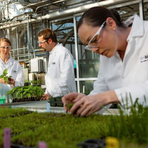 BASF Acquires Additional Seeds and Crop Protection Businesses from Bayer