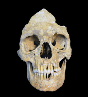 Stone Age Hepatitis B Virus Decoded
