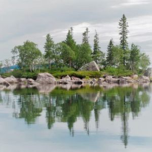 Researchers used a model study system consisting of 30 lake islands in the boreal forest of Sweden.