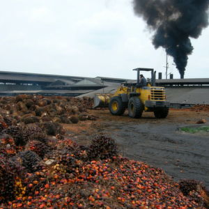 Palm oil processing plant in Indonesia