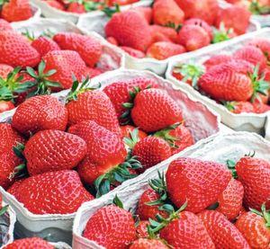 Spezielle Tomaten Und Erdbeer Sorten Sorgen Für Allergien